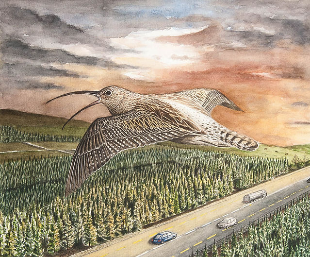 curlew painting motorway watercolour