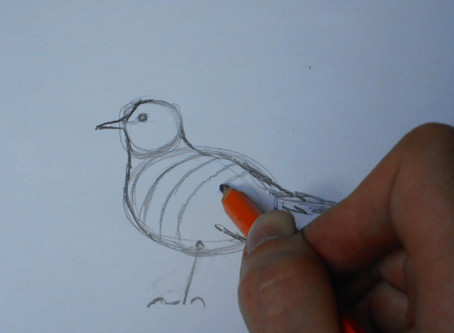 How I draw birds for painting