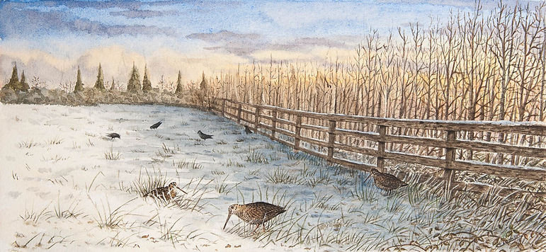 woodcock painting winter watercolour