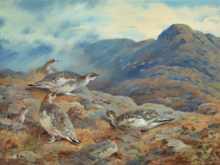 Top 5 artists that inspire me: 1. Archibald Thorburn (1860-1935)