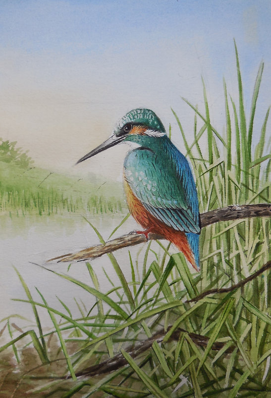 Kingfisher watercolour painting river