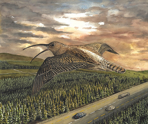 The Cry of the Curlew, Conor O'Connell.j