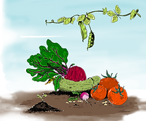 Animation Potager - Couleurs.png