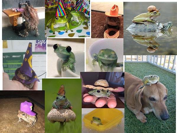 Frogs! (1).jpg