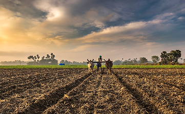 Farmers In India Article Image #2.png