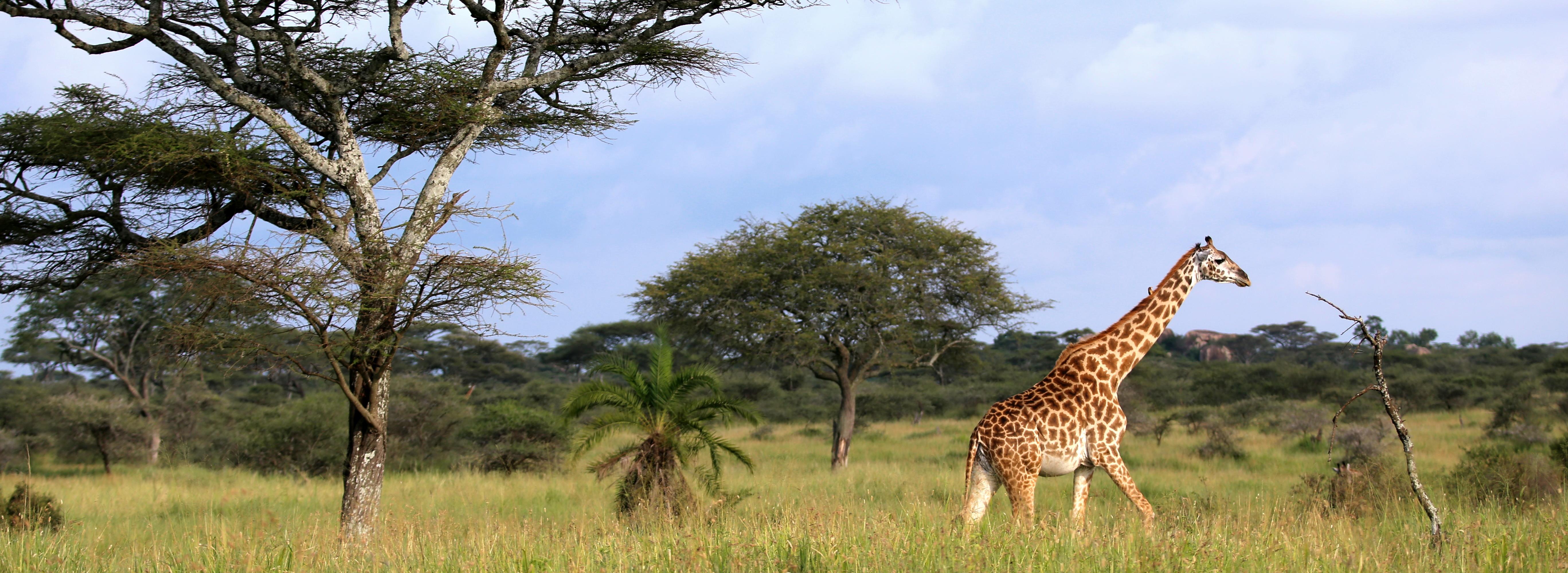 Serengeti NP