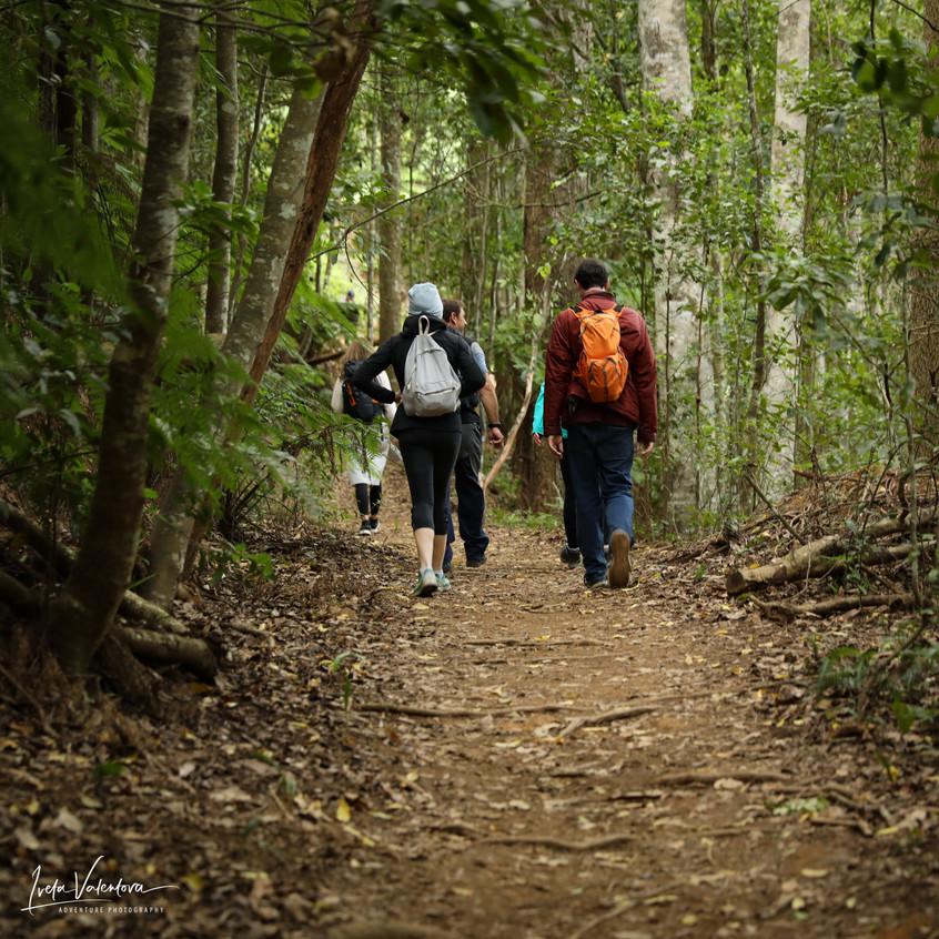 Clover Hill trail