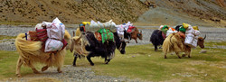 Mt Kailash Kora - Tibet