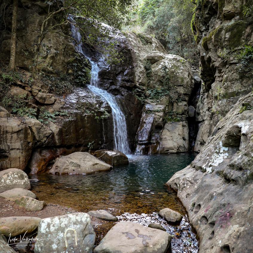 Cascades Rainforest Walk