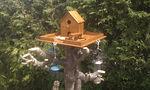 Dev255 - 5 Star Bird House - NoMet.jpg