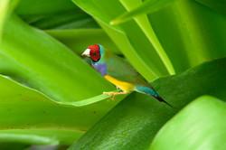 Dev255 - A Bird - NoMet