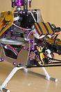 Dev255 - Honey Bee King 2 Modded - NoMet