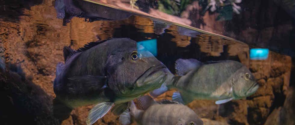 Promoção Mês de Junho   Oceanic Aquarium