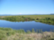 McArthur Swamp on a clear day
