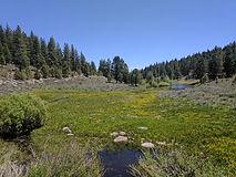 A flower filled meadow near a creek