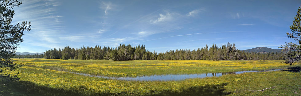 A meadow filled with yellow wild flowers