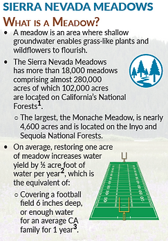 Sierra Nevada Meadows Infographic