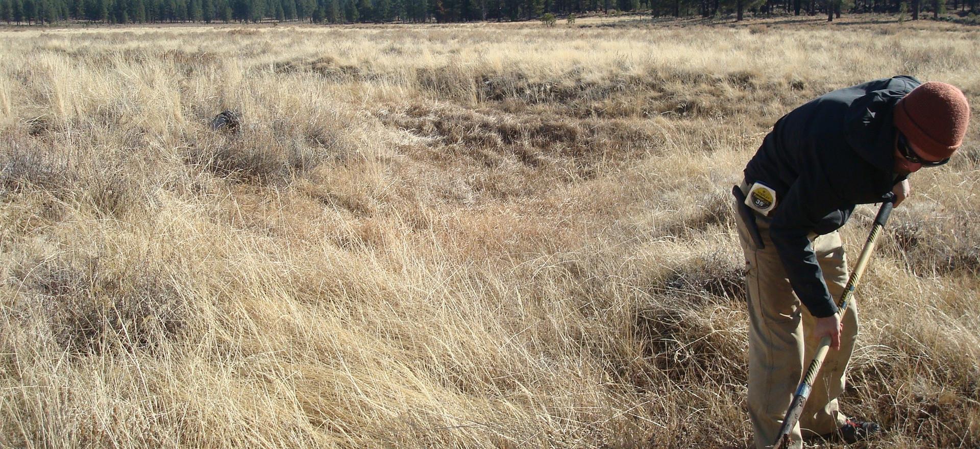 Wetland Delineation