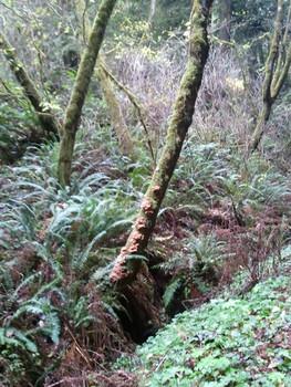 Fungi on a mossy tree near Jolly Giant creek