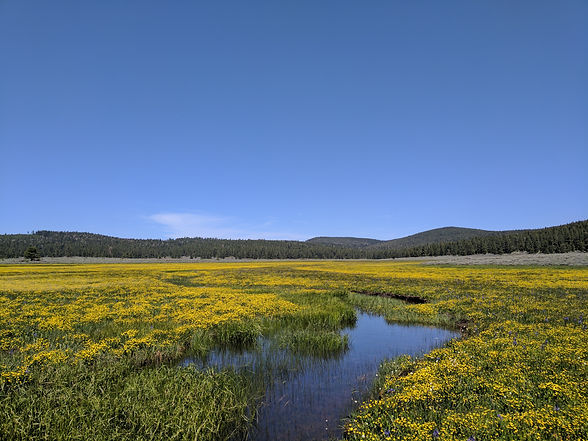 A meadow with a creek running through it