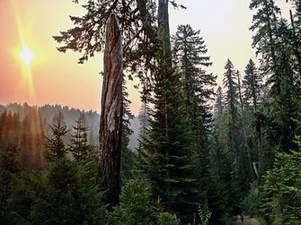 Smokey sunrise in the forest