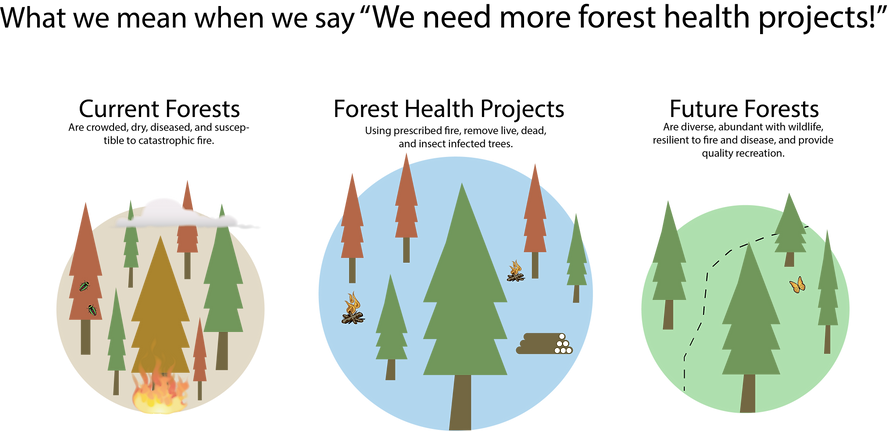 Forest Health infographic
