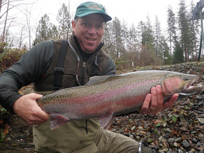 Large Steelhead