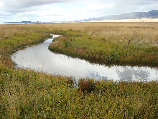 water flowing throuh a grassy channel