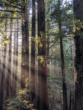 Mount Tamalpais, Muir Woods, Photo by Nicole Iwahashi