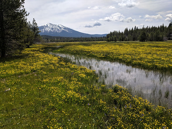 A meadow full of wildflowers