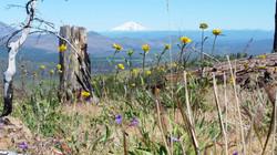 Wildflowers on Hat Creek Rim