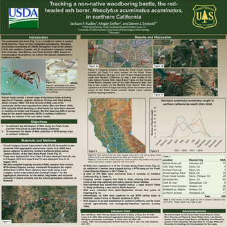 Tracking a non-native woodboring beetle, the red-headed ash borer in Northern California