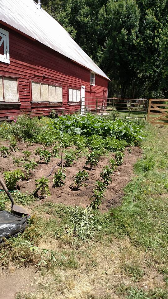 Summer garden at Siskiyou Brew