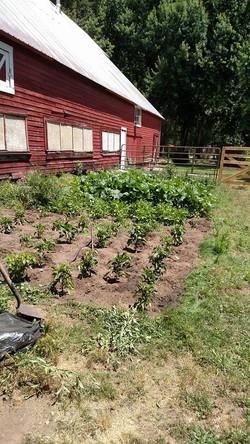 Summer garden at Siskiyou Brew