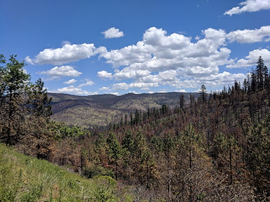 Landscape of a partially burned forest