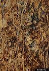 Pinyon ips. William M. Ciesla, Forest Health Management International, Bugwood.org