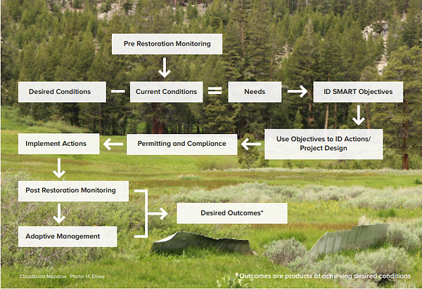 Meadow Restoration Flow Chart