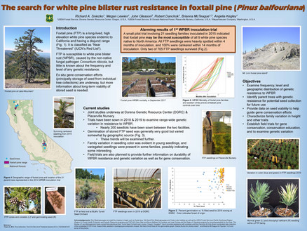 The search for white pine blister rust resistance in foxtail pines
