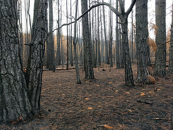 Burned forest area
