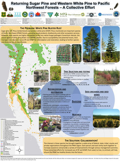 Returning sugar pine and western white pine to pacific northwest forests-- a collective effort