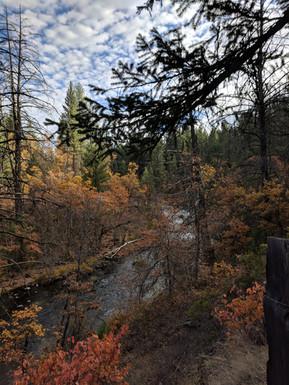 Fall foliage near Burney Falls