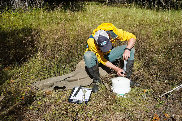 Carbon analysis in a meadow