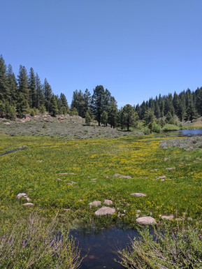 A meadow in Modoc
