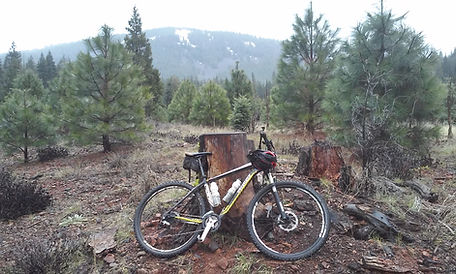 a mountian bike rests against a stump