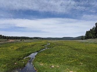 A stream cutting through a meadow