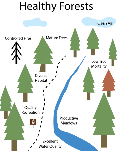 Depiction of healthy forest conditions