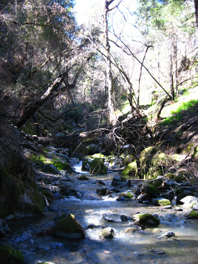 Yolla Bolly Wilderness
