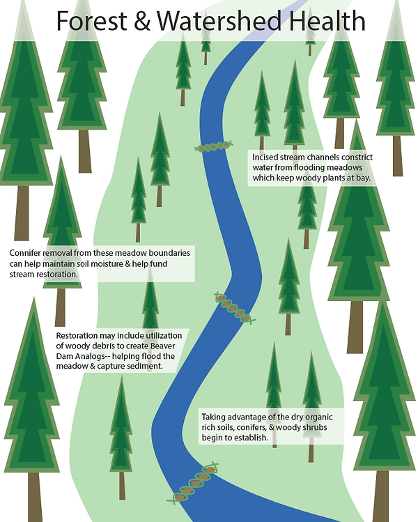 Forest and Watershed Health