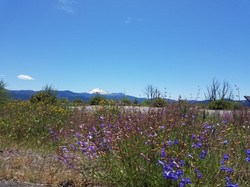Spring in Lassen National Forest