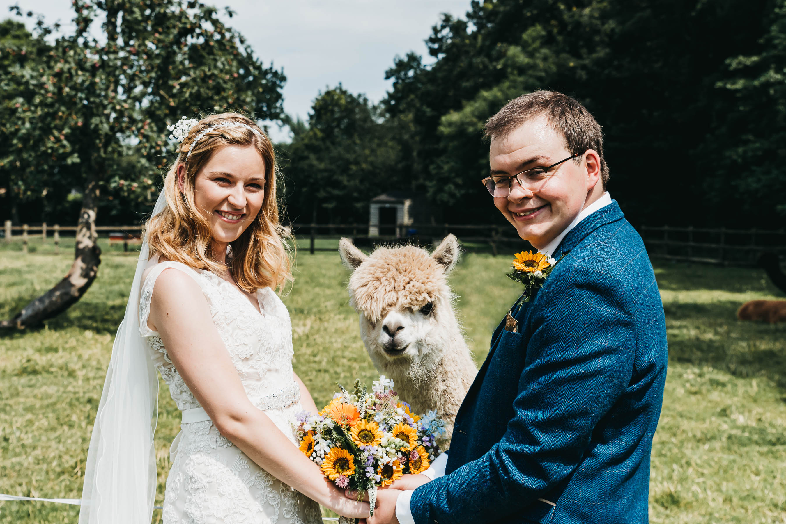 Alpaca wedding photography
